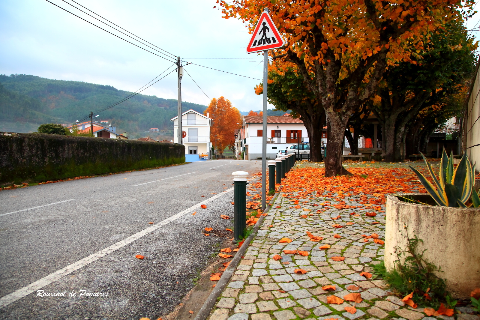 Outono em Pomares I (1)